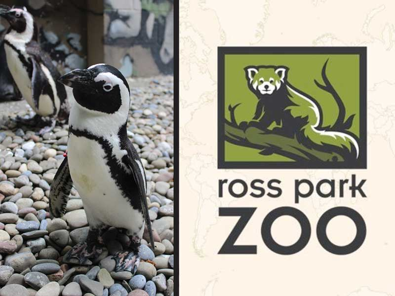 Students in the Introduction to Special Education 411 class have been working with the Ross Park Zoo to make it more accessible and inclusive.
