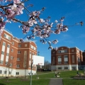 Your Home Away From Home: An Inside Look at the 6 Amazing Communities at Binghamton University