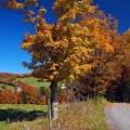 10 Places Around Binghamton To Enjoy The Fall Foliage