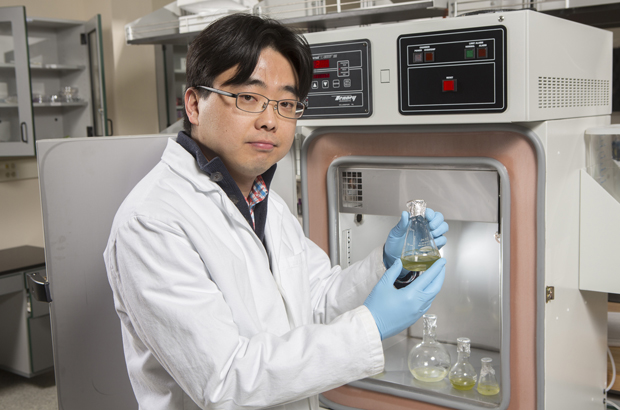 Seokheun Choi, assistant professor of electrical and computer engineering at Binghamton University, works in his laboratory on paper batteries as well as bacteria-powered fuel cells.