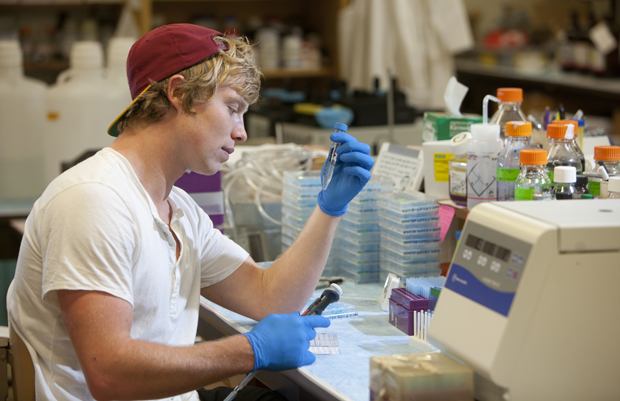 Keith Murphy of Massapequa, a cell and molecular biology major, works in the Science 3 laboratory of Susannah Gal, associate professor of biological sciences.  Murphy is one of the students taking part in the Howard Hughes Medical Institute program.