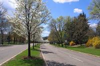 Flowering pears along Glenn G. Bartle Drive