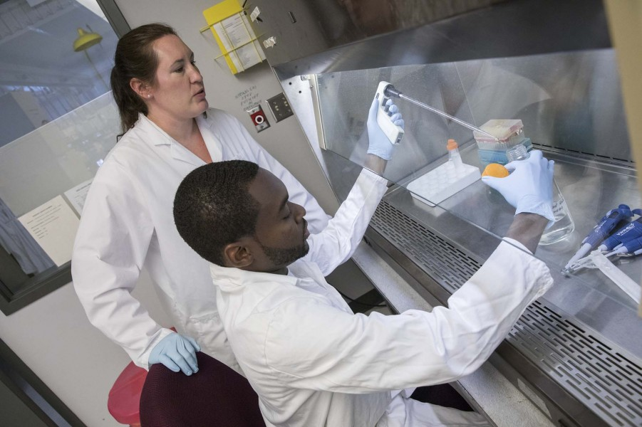Gretchen Mahler, associate professor of biomedical engineering, works at left with a student at a Binghamton University biomedical lab. The Thomas J. Watson School of Engineering and Applied Science professor will lead an effort to find the causes of calcific aortic valve disease.