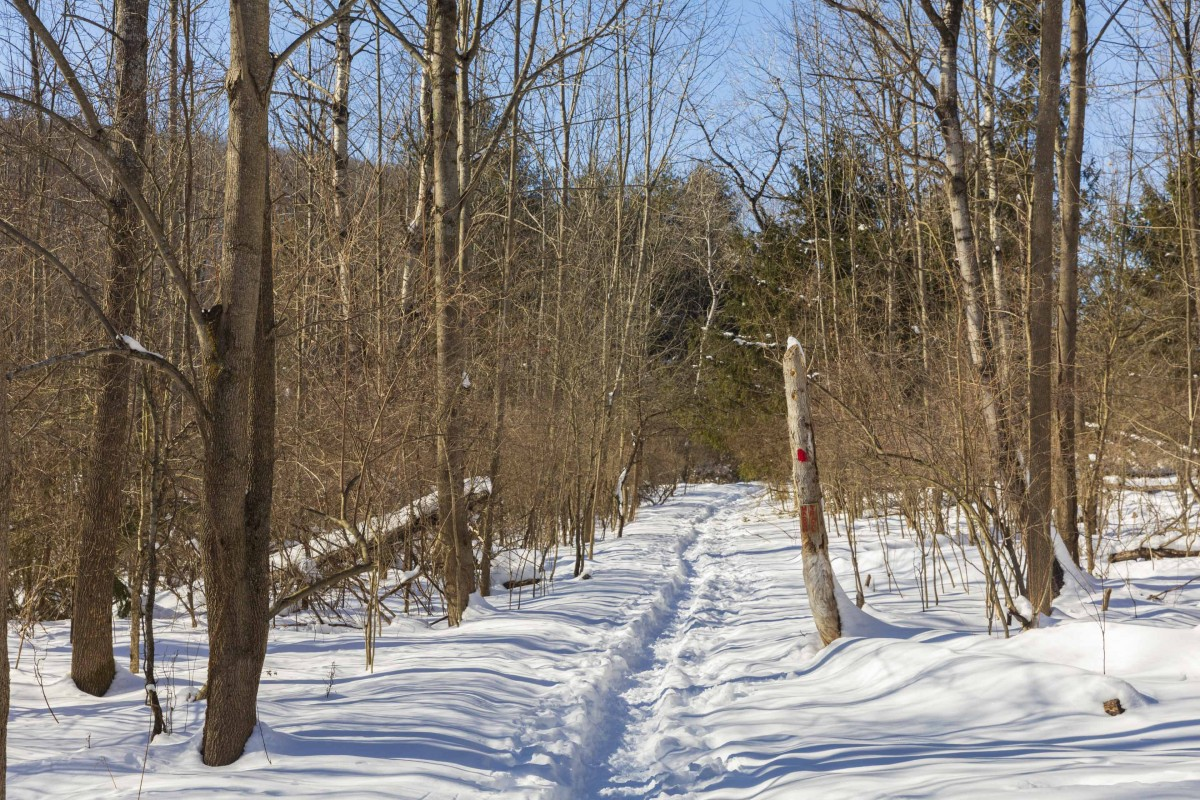 A sunny winter day in the Binghamton University Nature Preserve after a snowfall, February 8, 2021.