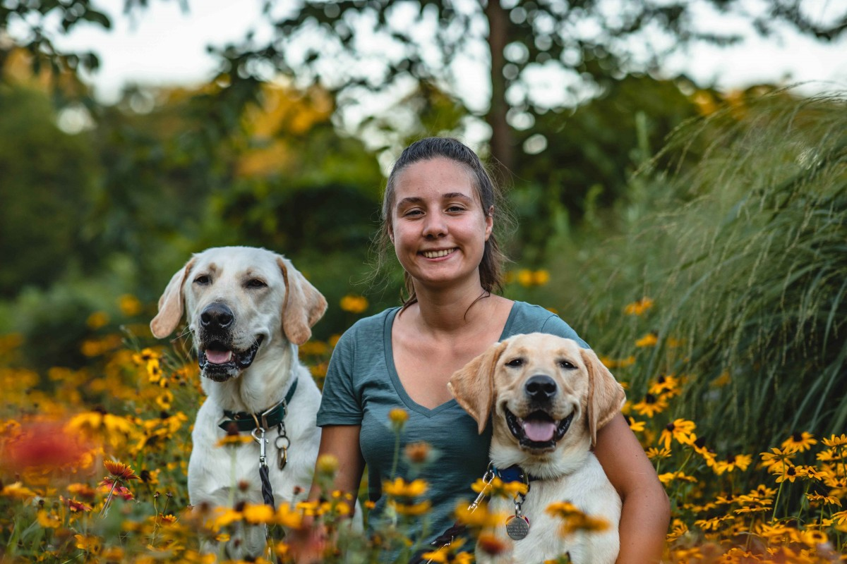 Biological sciences major Yfke Havinga and the yellow Labs she raised: Stan and Lancelot.