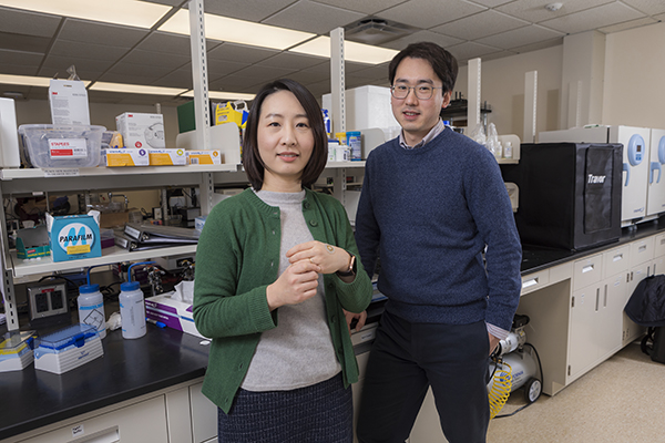 Two faculty members from the Watson College of Engineering and Applied Science – Ahyeon Koh, left, and Daehan Won, are part of the sweat-study team.