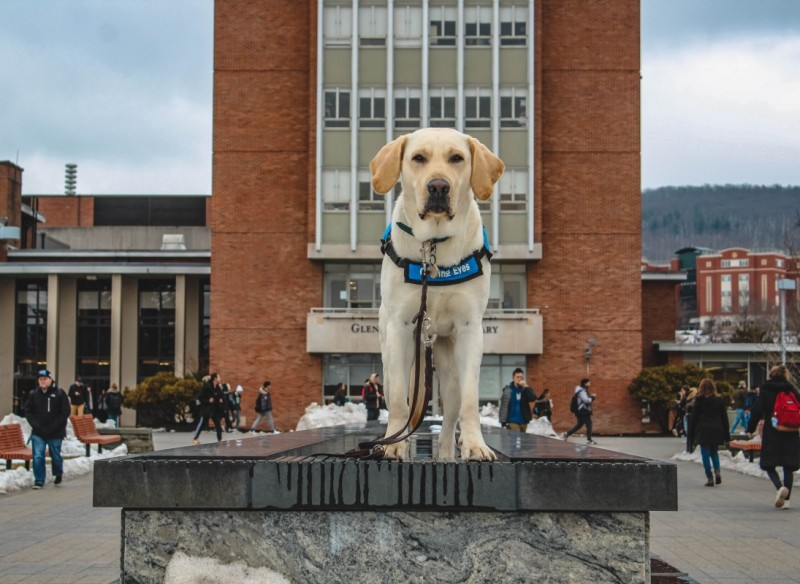 Stan, a guide dog in training, strikes a pose on the campus infinity fountain.