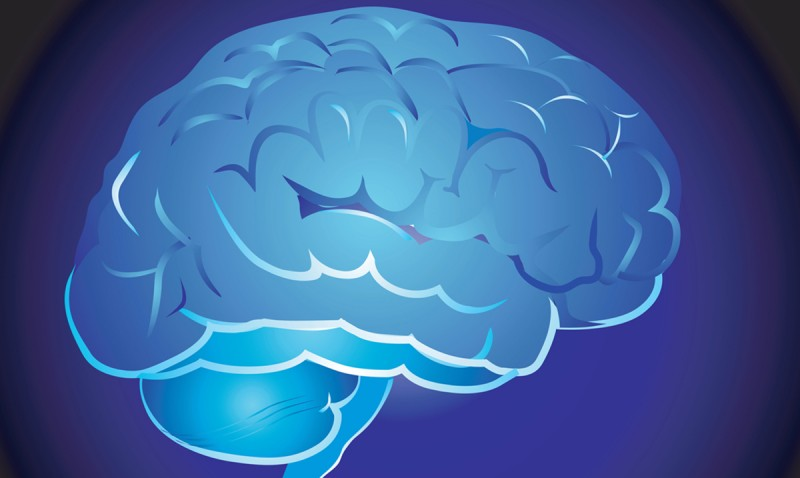 New research at Binghamton University looks at how brain folds form.