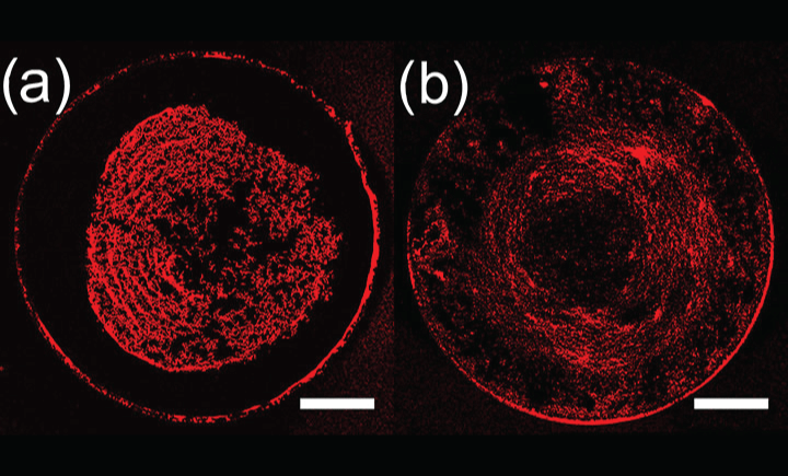 For figure A, there is particle transport to the apex of the target droplet and a dense center deposit is formed. For figure B, the final mapped deposit is more uniform.