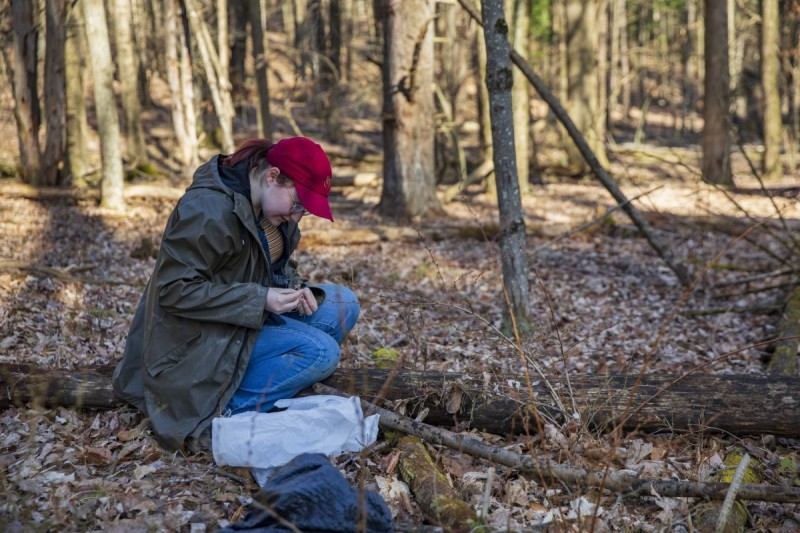 Diana Knoell gathers leaves in the Binghamton University Nature Preserve for a research project.