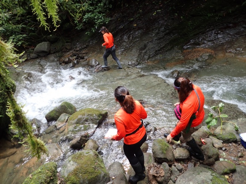 Lindsey Swierk and fellow researchers look for lizards in the Las Cruces Biological Center in Costa Rica, wearing matching orange shirts.