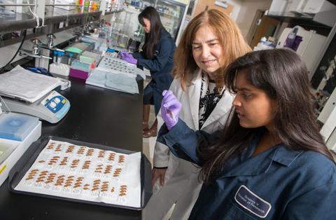 Graduate PhD Program - Psychology | Binghamton University